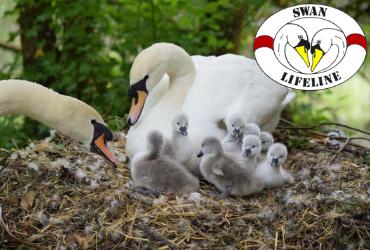 Swan Lifeline